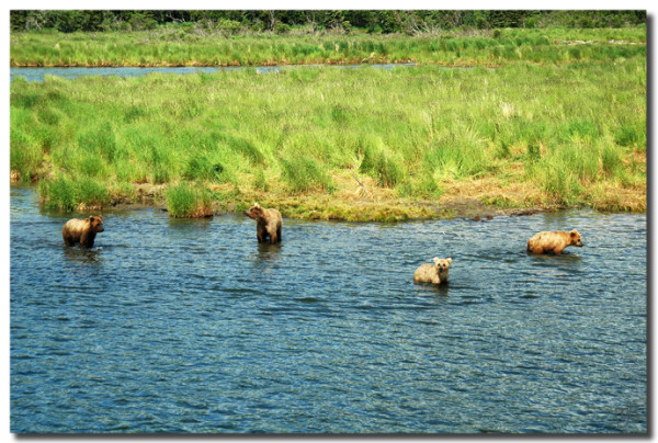 12 探秘熊的乐园