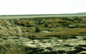 【正蓝旗图片】无人之疆 - 坝上草原,锡林郭勒,克什克腾游记(3)