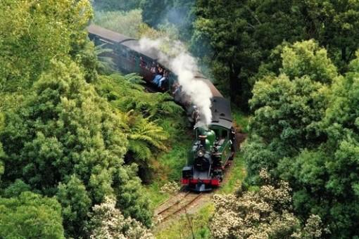 墨尔本蒸汽火车 菲利普岛观企鹅一日游(喂鹦鹉 绝美雨林 圣雷莫海港