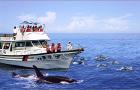 花莲赏鲸/海豚特色体验,寻获率高达95%(花莲市区专车接送)