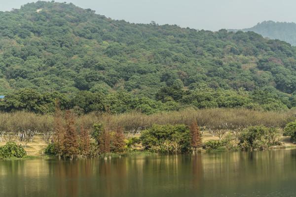 【寻梅踏雪】广州萝岗香雪公园一日游