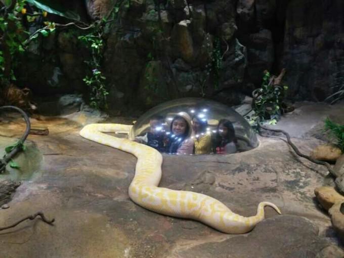 长隆野生动物园,广州长隆旅游度假区自助游攻略 - 蚂