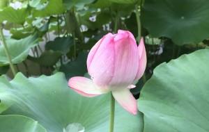 【黄冈图片】周末老家走一走:摘桃子,观荷花,赏蝴蝶,看葡萄