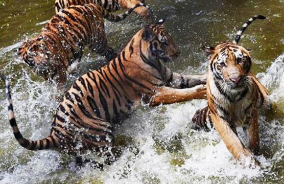深圳野生动物园电子门票(多套餐可选)