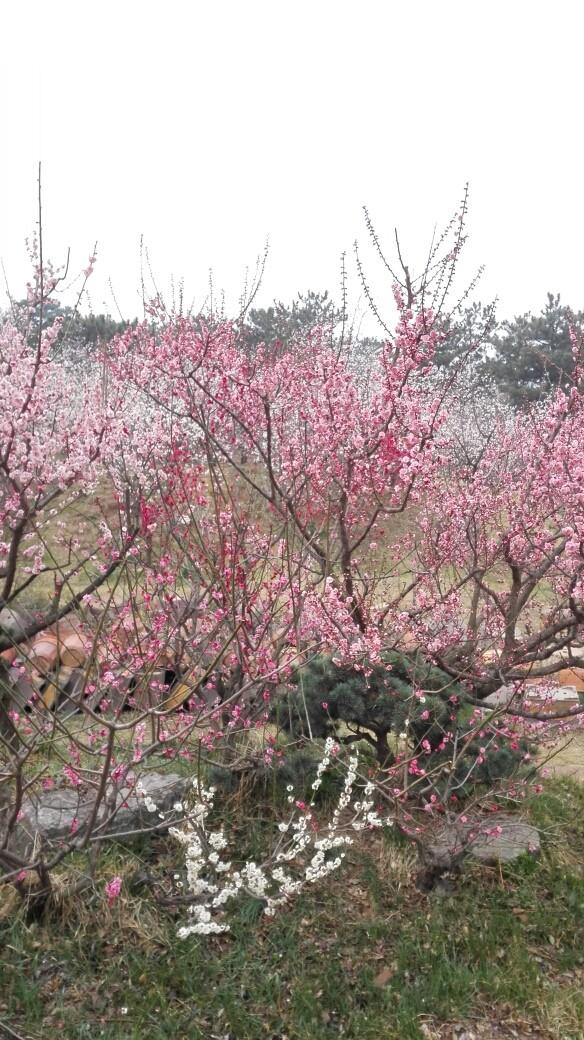 农历三月初春,青岛天气依然时风时雨,冷暖不定.