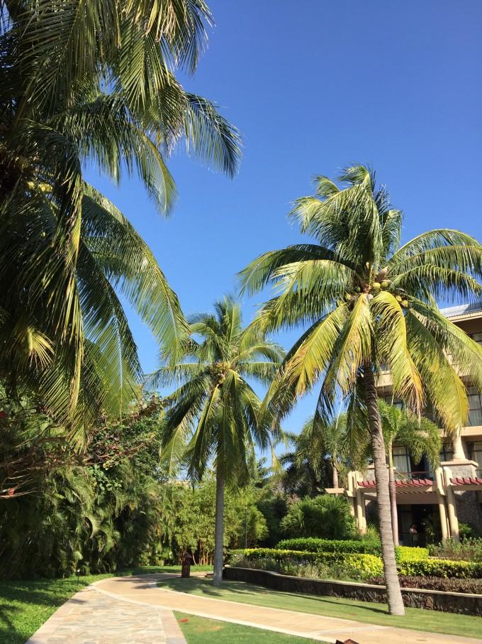阳光沙滩海浪椰树便是三亚