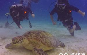 【薄荷岛图片】关于巴里卡萨岛潜水度假村(balicasag island dive resort)的干货攻略