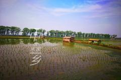 插秧季节走进中国大米之乡-五常,寻找美味的秘密。