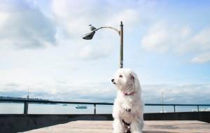【西雅图图片】阿咩 // 旅行日记丨Seattle丨Travel w/ My Dog