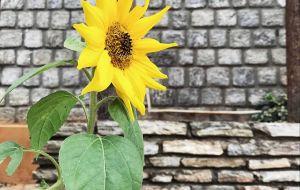 【不丹图片】不丹——等你长大,我便娶你 ~游记+实用攻略碎碎念