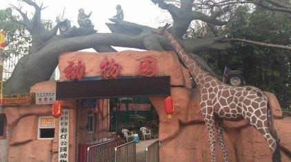 动物园现展示的动物有1-3级保护动物:东北虎,非洲狮,金钱豹,大灰狼,黑