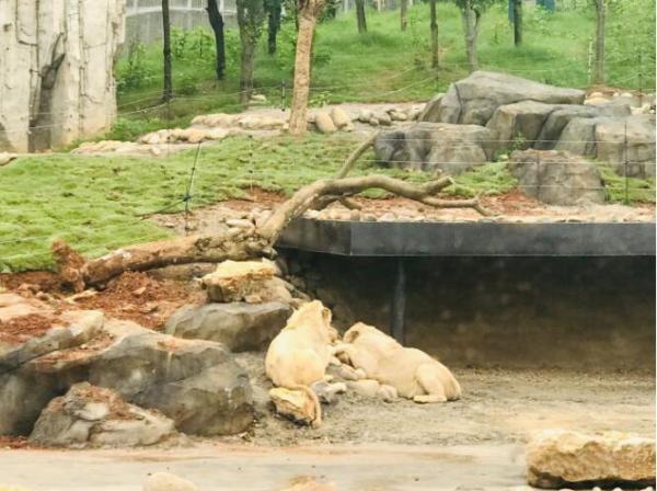 家门口的动物园——太湖龙之梦乐园动物世界