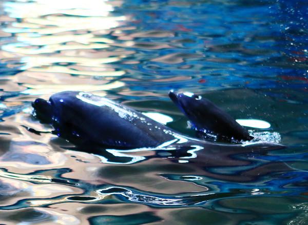 【端午+六一】19.9元西霞口童趣特惠,威海西霞口神雕山野生动物园海豚馆添新丁