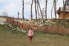 快乐的小脚(12)——照金~香山~2日游