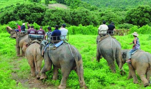 泰国清迈骑大象 美旺大象营 黑森林 半日游