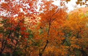 【平顶山图片】鲜为人知的大峪秋色