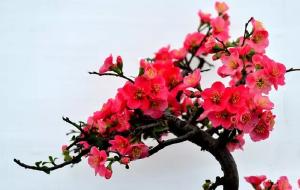 【漯河图片】神州鸟园浪一圈:发现海棠花·未眠