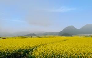 【曲靖图片】早春二月,游罗平花海,九龙飞瀑