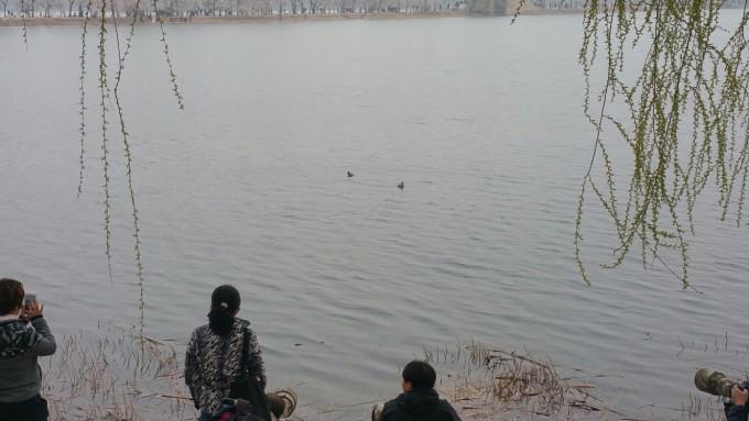 春天的颐和园西堤,是春天踏青游湖好地方. 水墨西堤! 从西堤看万寿山!