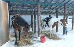小樽娱乐-Haruka Horse Ranch