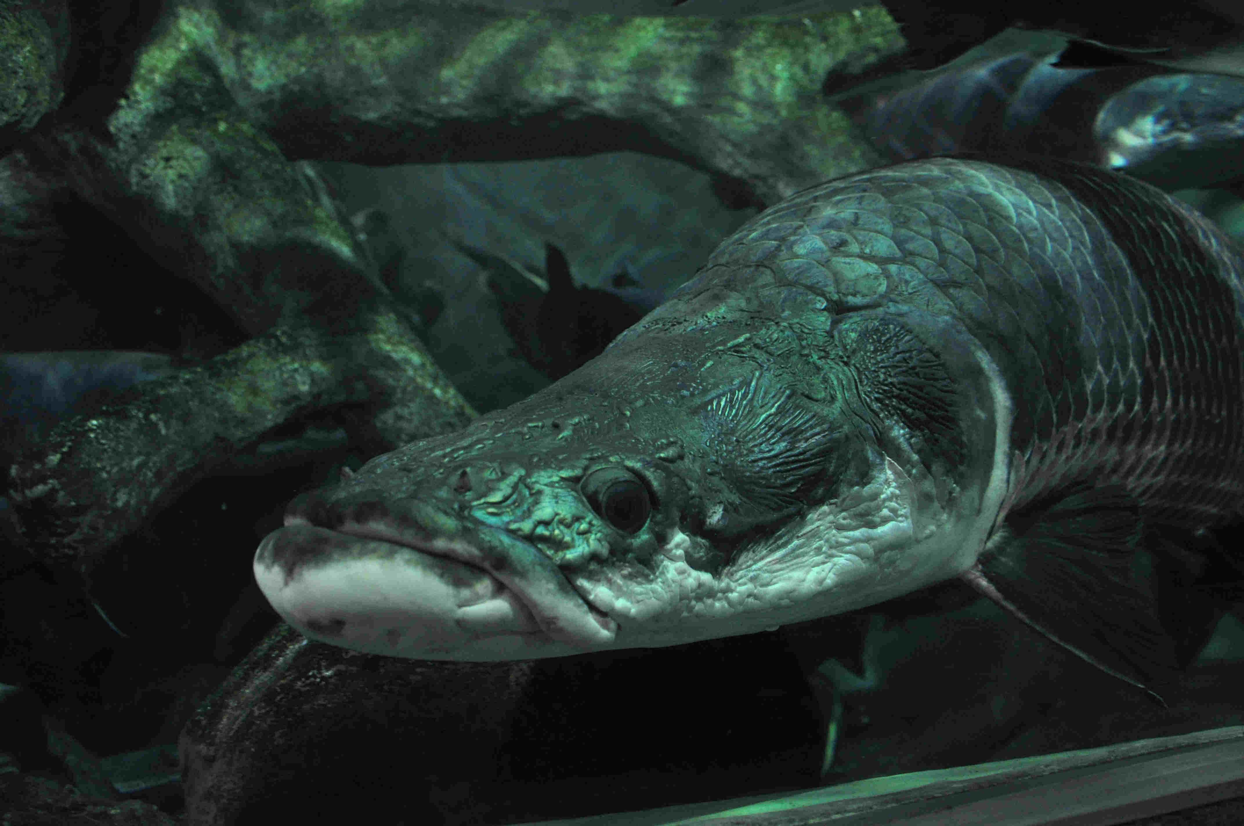 海底龙宫——身临其境的深海体验