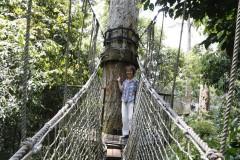 云南游览之六 ------ 游览热带雨林望天树景区,踏上树冠走廊,漫步菲利普小道
