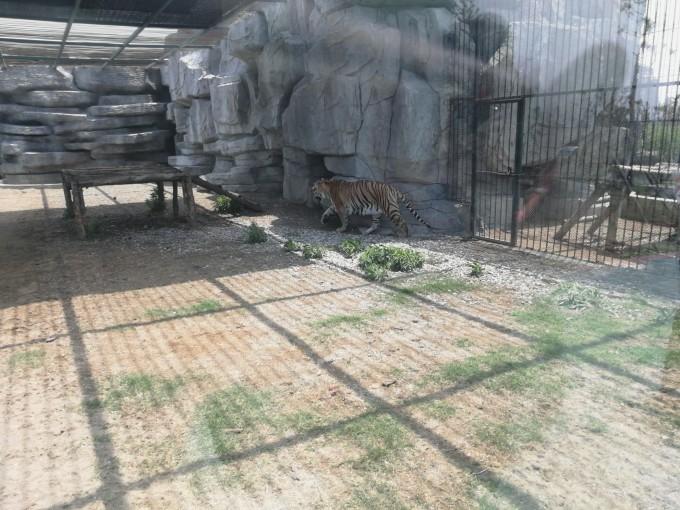 台州湾野生动物园一日游