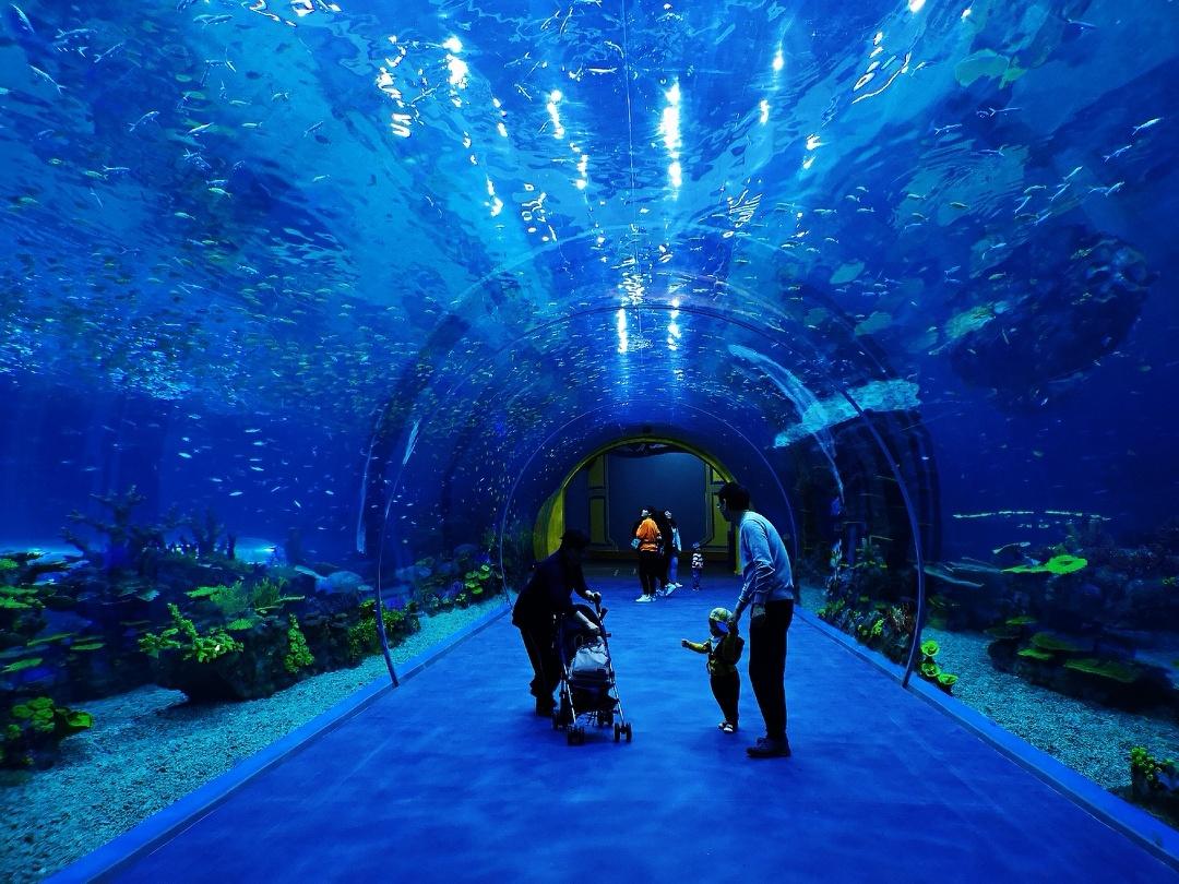 上海海昌海洋公园试营业抢先看