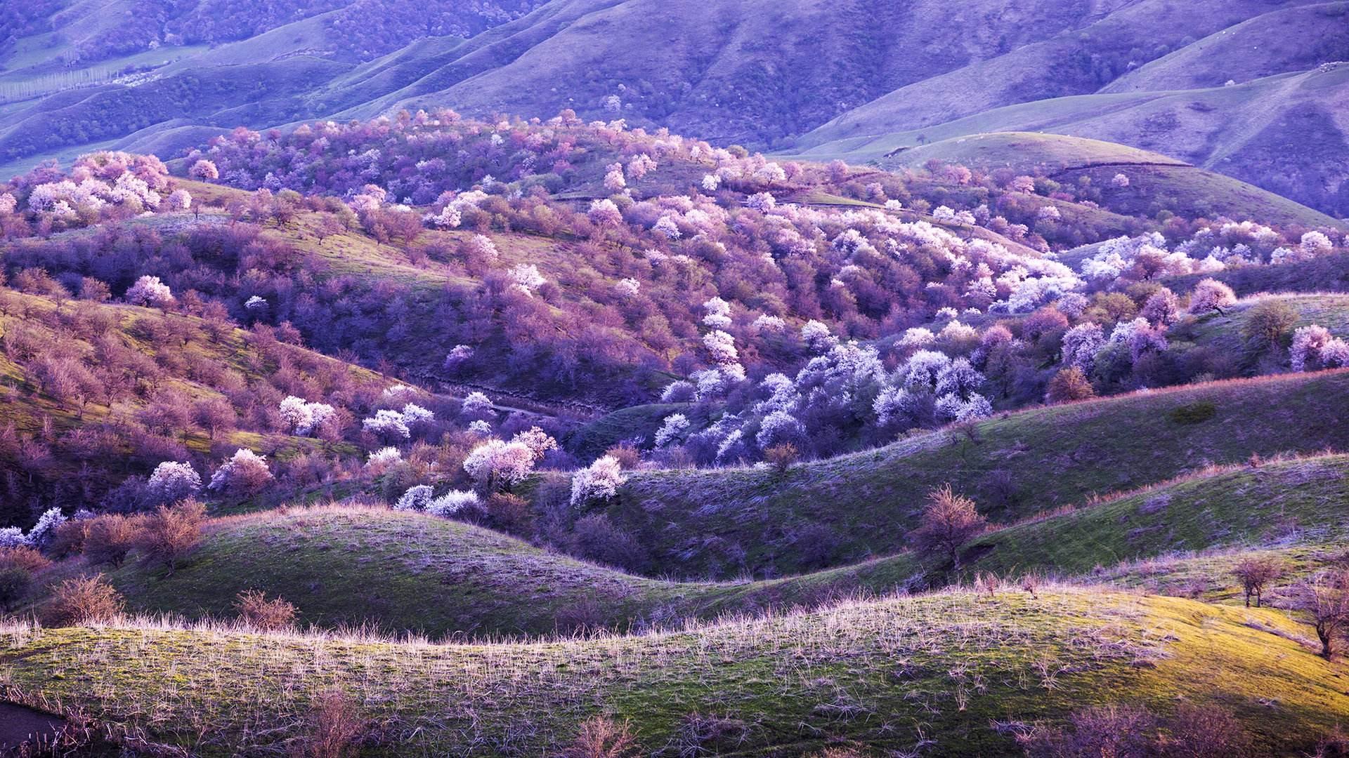 新疆旅游包车逍遥游-说走就走的旅行-体验北疆的美-人间仙境喀纳斯、高山湖泊赛里木