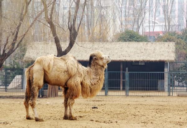 山东省旅游 济南旅游攻略 济南动物园  出发时间/2019-02-26