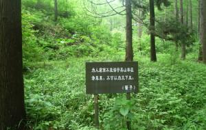 【信阳图片】信阳的氧吧——波尔登森林公园