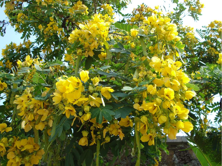 海南植物和花卉