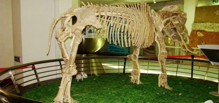 中国古动物博物馆