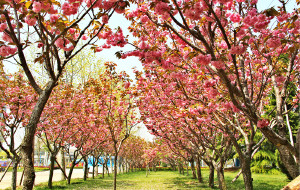 【荣成图片】五月的鲜花开满荣成