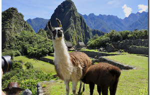 【秘鲁图片】古老山巅上的迷城---马丘比丘 【寻古访今秘鲁行(12)】