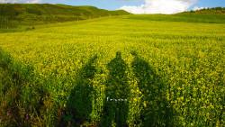 甘南景点-当周草原