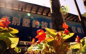 【庐山图片】庐山-景德镇-婺源-南昌 说好的小清新呢!