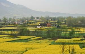 【汉中图片】西安行之大美汉中油菜花