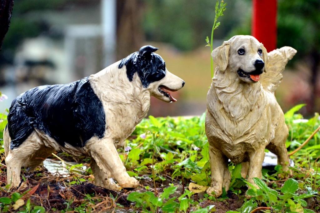 """雨中的""""宠物狗"""""""