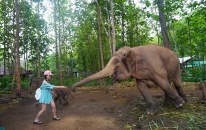 清迈娱乐-大象自然保护公园