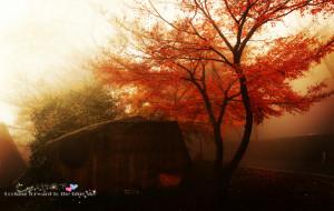 【莫干山图片】莫干山行---深秋误入仙境之如梦如痴