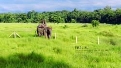 尼泊尔景点-奇特旺国家森林公园(Chitwan Nationality Park)