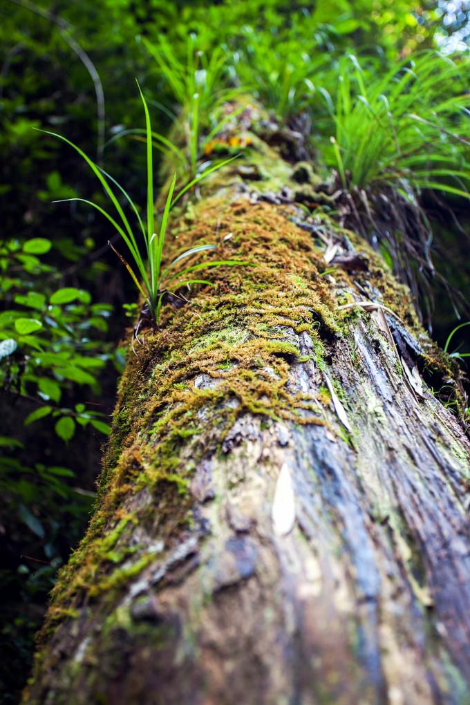 南岭国家森林公园自助游攻略海南旅游图片