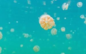 【帕劳图片】蜜月帕劳,让你融化的帕劳之蓝