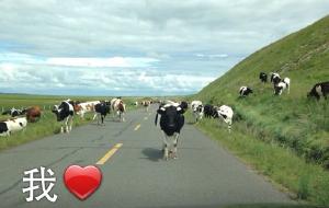 【室韦图片】#消夏计划#一个人的大草原之旅-2015年6月