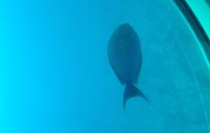 夏威夷娱乐-潜水艇游