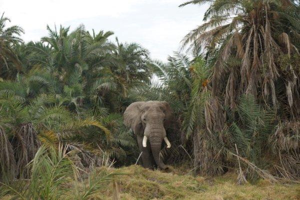 热带丛林里钻出一头大象   成群结队的各种动物   一只河马趴在地上,原来不远处有个湖,他这是在为同伴们放哨么   看到湖里那只河马张着大嘴巴了么,水里有好多只,过几分钟会浮出水面换个气,此起披伏的   肯尼亚圣山——the majestic mt. ki