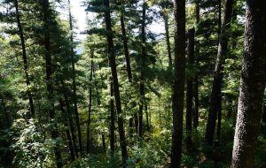 【伊春图片】大东北环游7600公里之六:从五大连池黑黑的火山口到小兴安岭森森的红松林