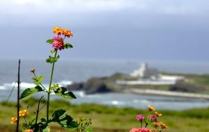 【金门图片】#消夏计划#离岛之旅:阳光沙滩海浪仙人掌~