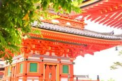 第一缕夏风吹过的霓虹国(日本大游玩)